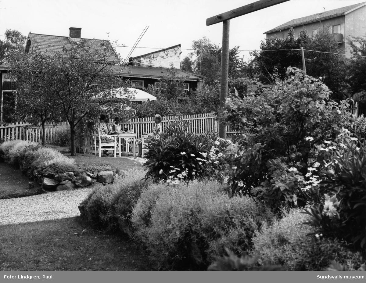 Nygatan 15. Trädgården.