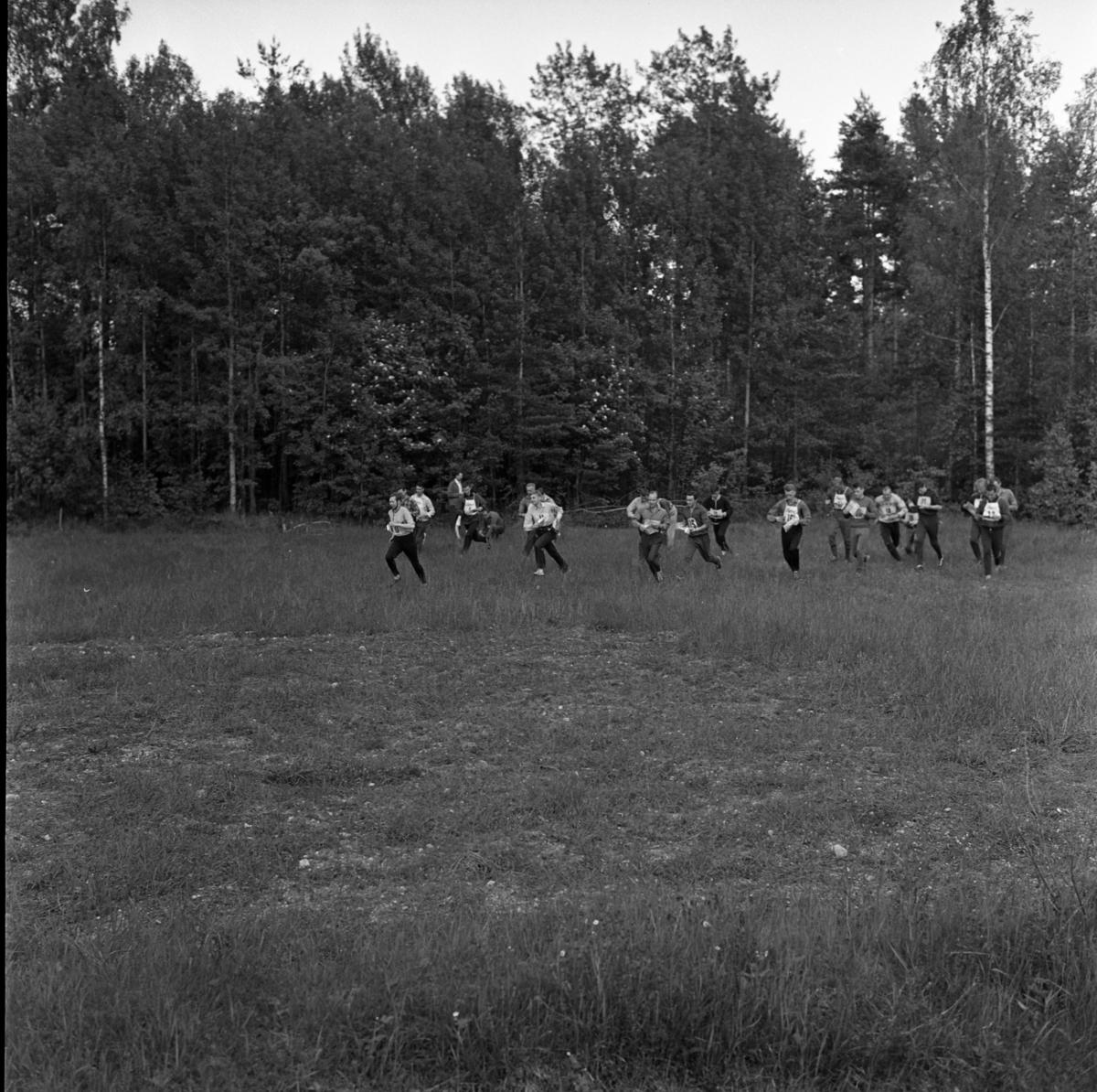 Tele-kaveln. En orienteringstävling. Orienterare, med nummerlappar, kommer löpande ur skogen. De har sina kartor i händerna.