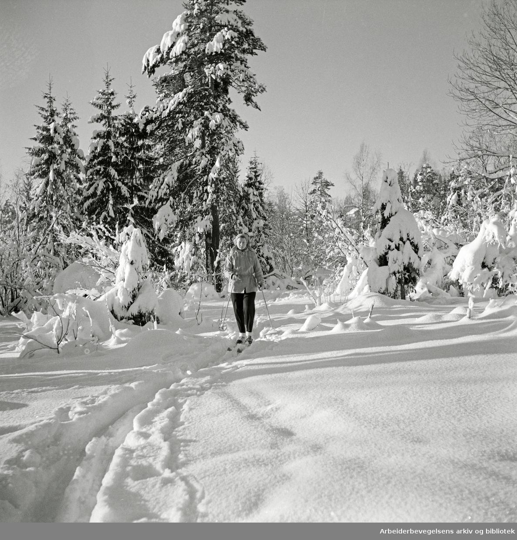 Vinter i Nordmarka. Skitur. 04.03.1954.