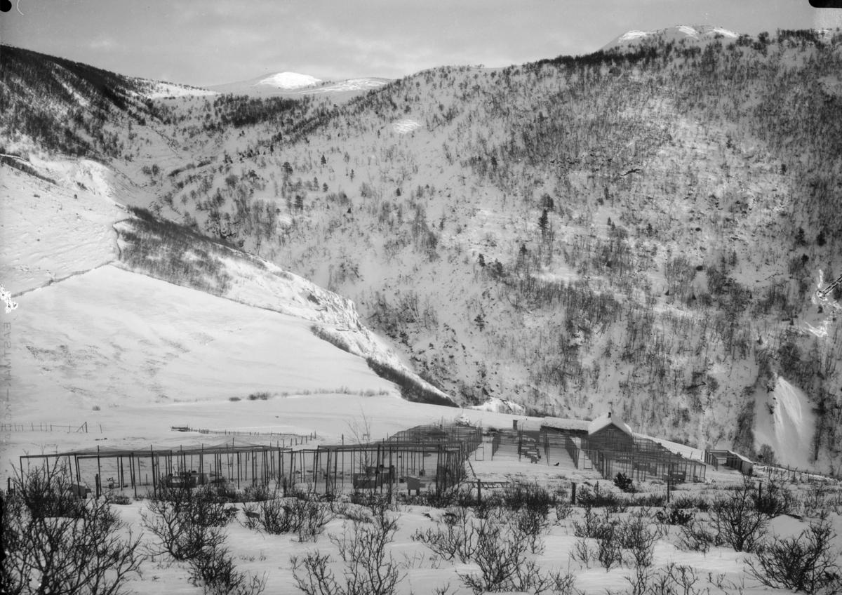 Revfarm på flate ved juv og bratte fjellsider. Vinterbilde