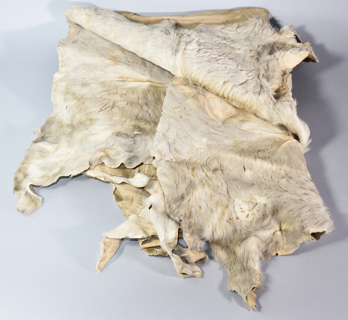 Fäll av kalvskinn, vit med bruna fläckar, rektangulär. Håret delvis borta.