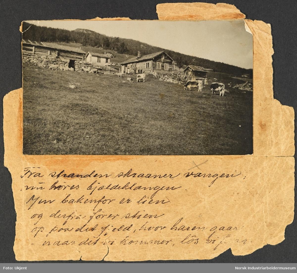 Gården Nord-Vågen på Møsstrond. Ola og Anne Vågen står ved gamlestugo. I lia gresser Telemarkskyr og sau. Andre hus, fjøs og gårdsbygninger