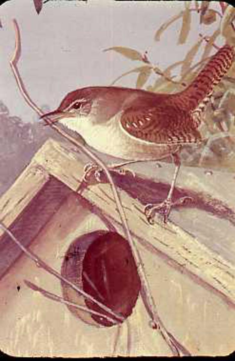 Fugl, tegning