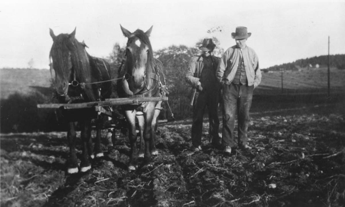 Potetopptak: Hans og Jørgen Ruud med hesten Fridjof og ukjent.