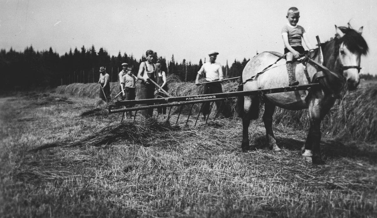 Høyonn, hest med sleperive og menn som hesjer.