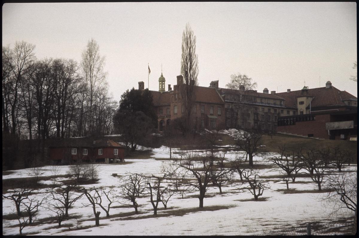 Ringstabekk, Høgskole