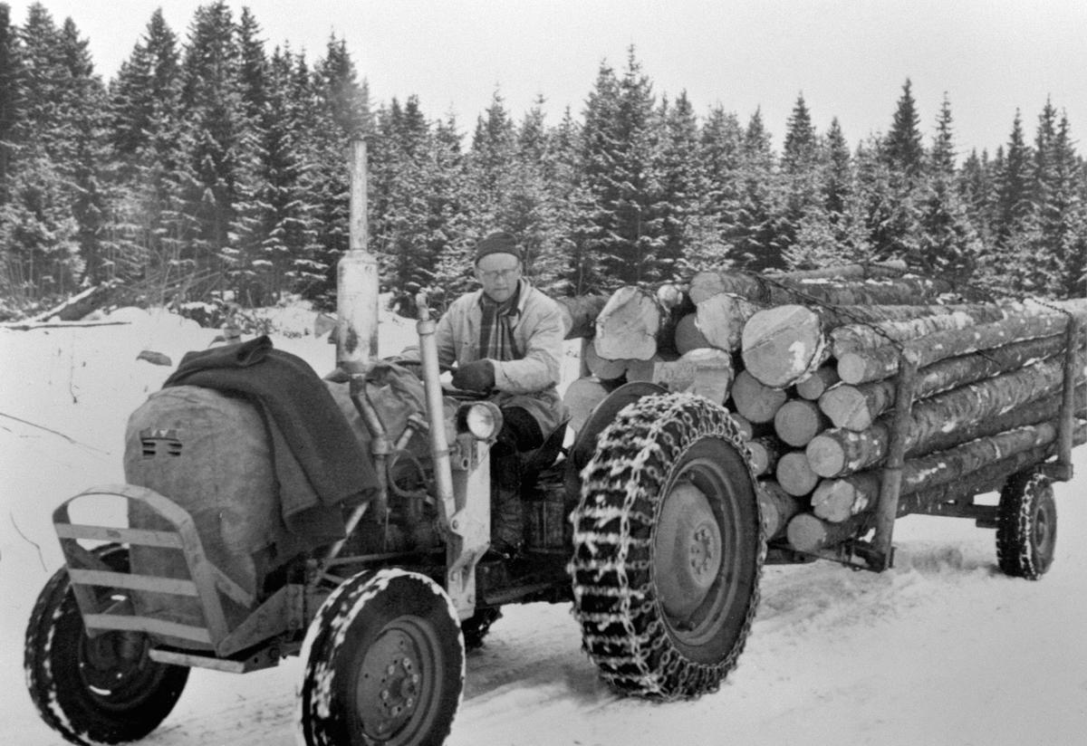 Tømmerkjøring med traktor på Holo mellom, Ringsaker. Lars Glestad på traktoren.