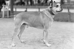 Fru Pedersens hund