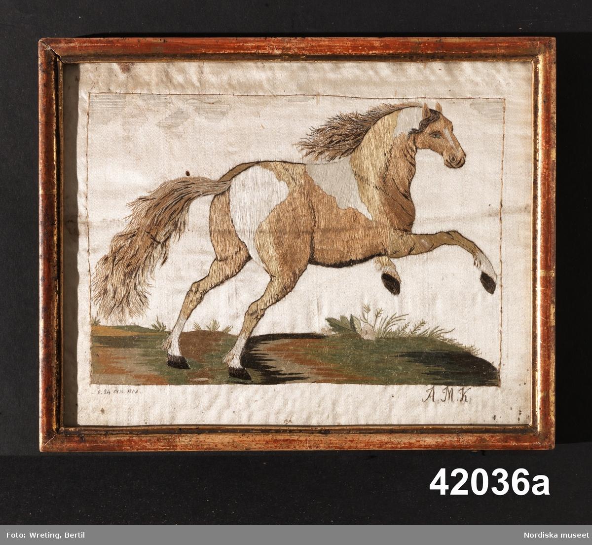 Djur, häst