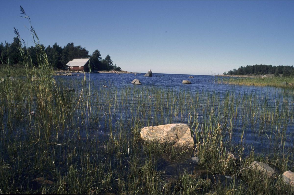 Naturreservatet Kapplasse, Marskär, Sikhjälma, Hållnäs socken, Uppland 2000