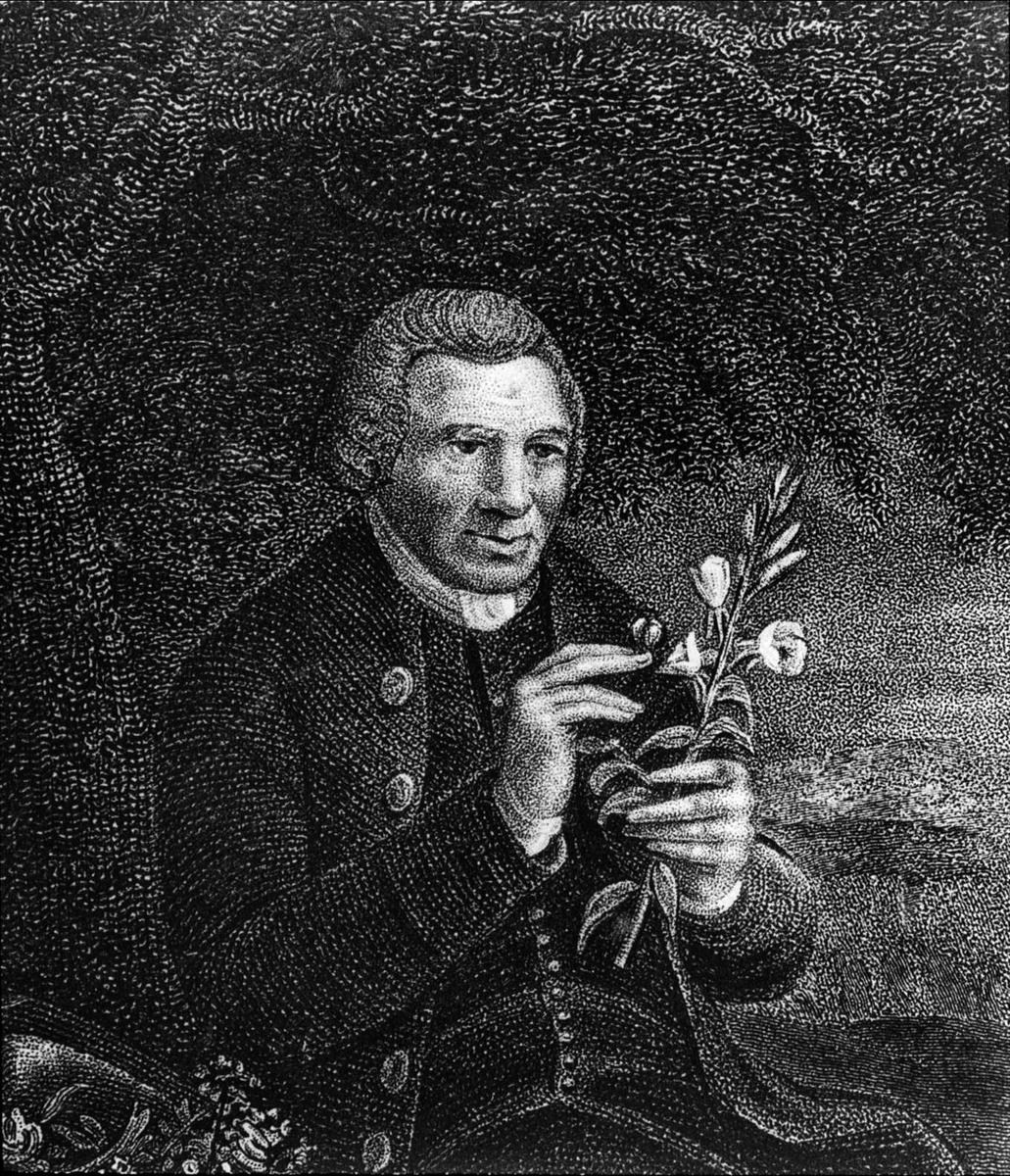 Porträtt av en man som studerar en växt