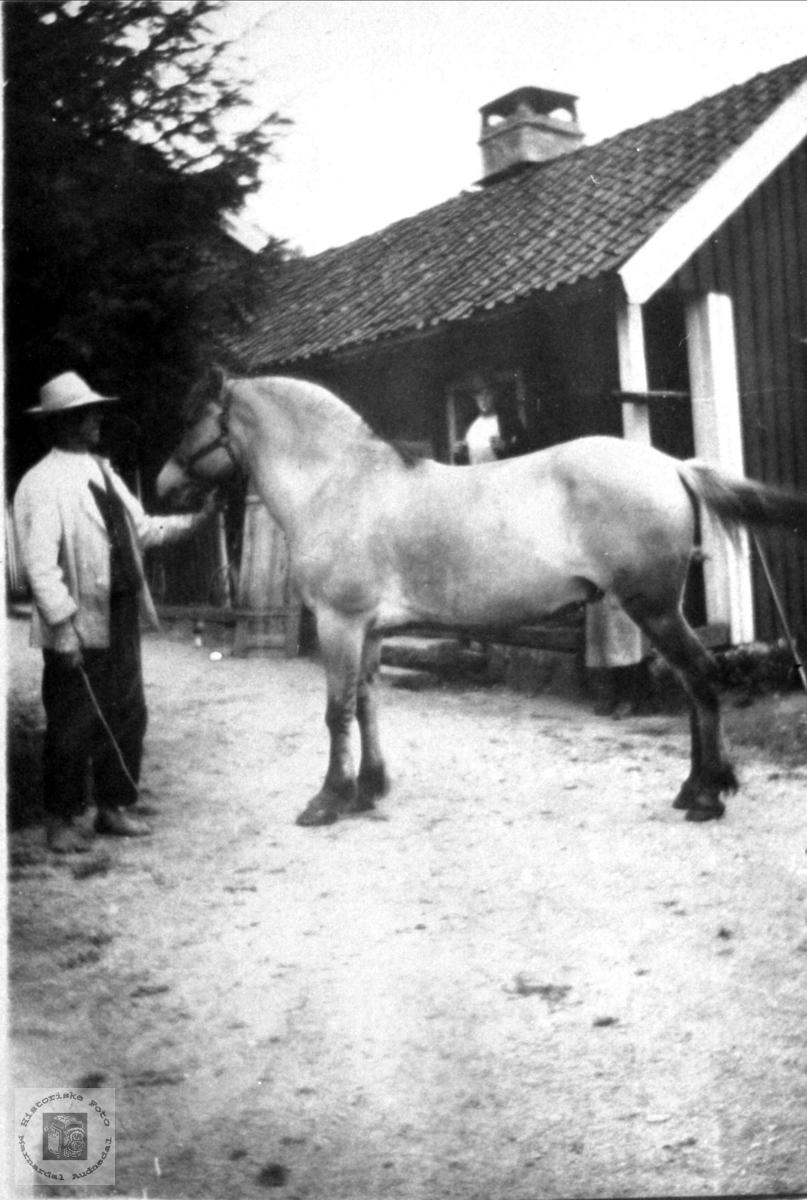 """Fredrik Skjeggestad med fjordingen """"Blakken"""", Bjelland."""