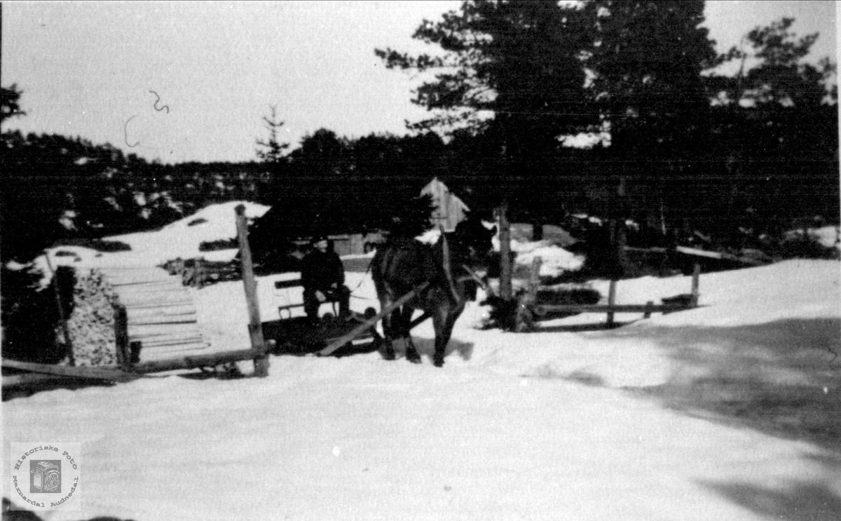 Med hest og slede på Birkeland i Laudal.