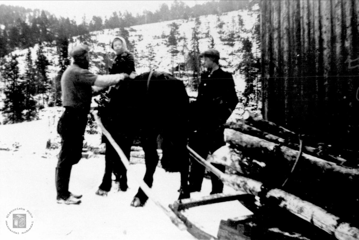 Pause i tømmerkjøringa, Bjelland.