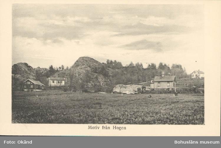 """Tryckt text på kortet: """"Motiv från Hogen."""" """"Svenska Litografiska AB Stockholm."""""""