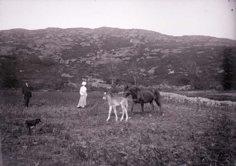 """Enligt text som medföljde bilden """"Fru Bodén med häst""""."""