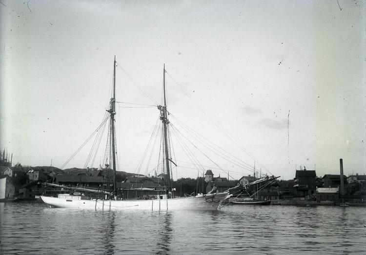 Skonerten ZIBA vid Lysekil 1899