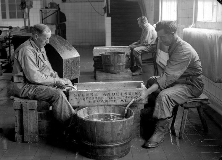 Tre fiskare som sitter och rensar ål