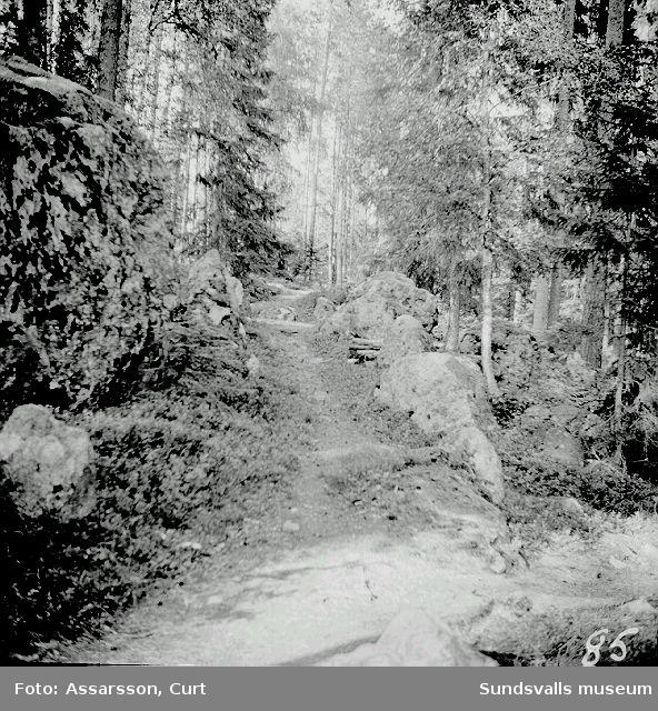 En del av gamla landsvägen mellan Medingen-Havern.