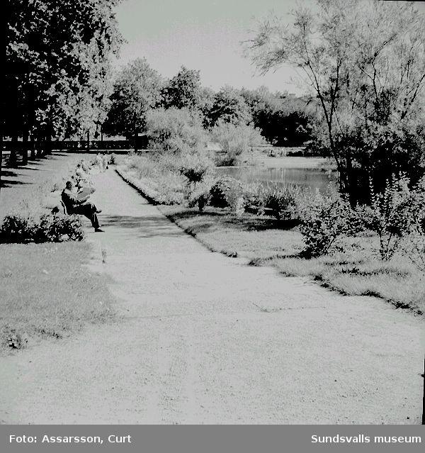 Bünsowska tjärnens planteringar.