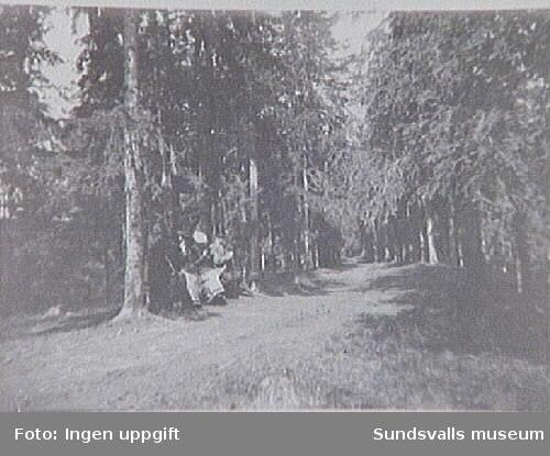 Gustaf Braathen på skogspromenad vid Hovid.