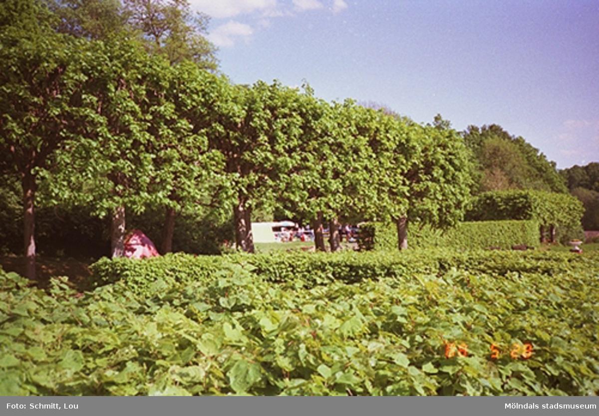 Träd, häckar och planteringar vid Gunnebo slott.