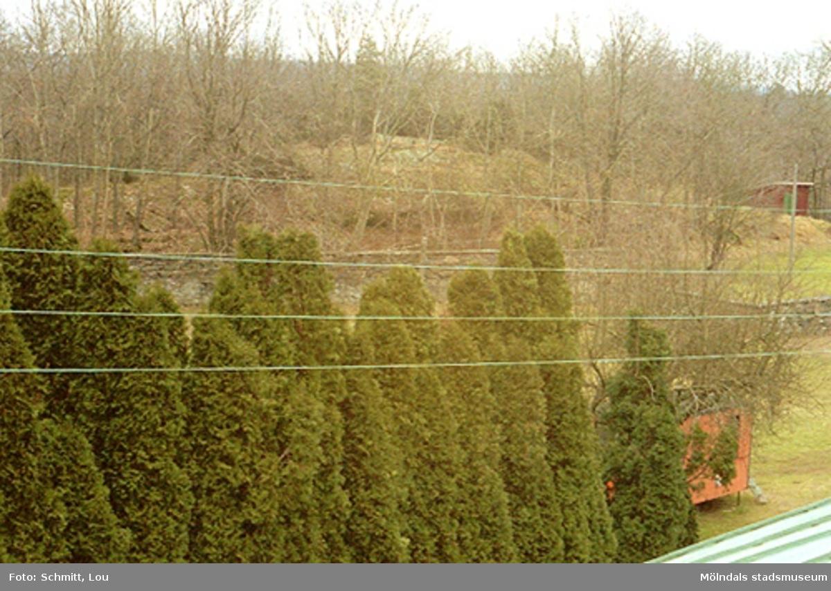 En del av Gunnebo slottspark. Man ser några träd och en stenmur i bakgrunden.