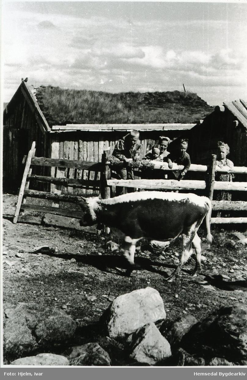 Prestegardshusvollen på stølsområdet Løkenstølane i Hemsedal  i 1952. Frå venstre: Yngvar Hjelm, Torbjørn Hjelm, Lilli Hjelm, May Toril Mythe og Magnhild Hjelm