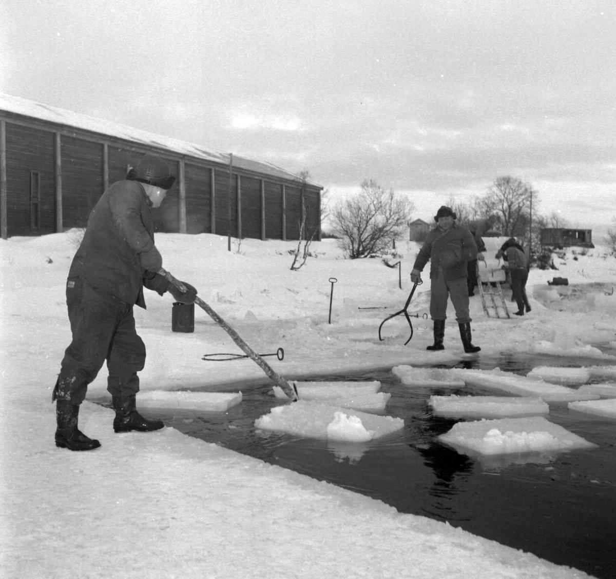 Isskjæring på Møkkelandsvannet, 1960.