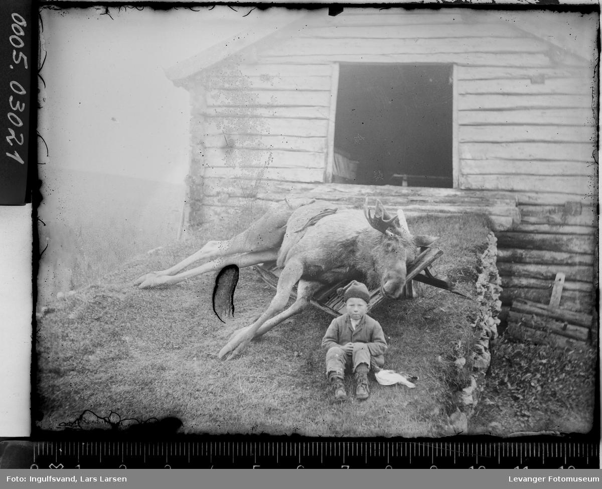 En død elg på en låvebru med en gutt sittende i forgrunnen.