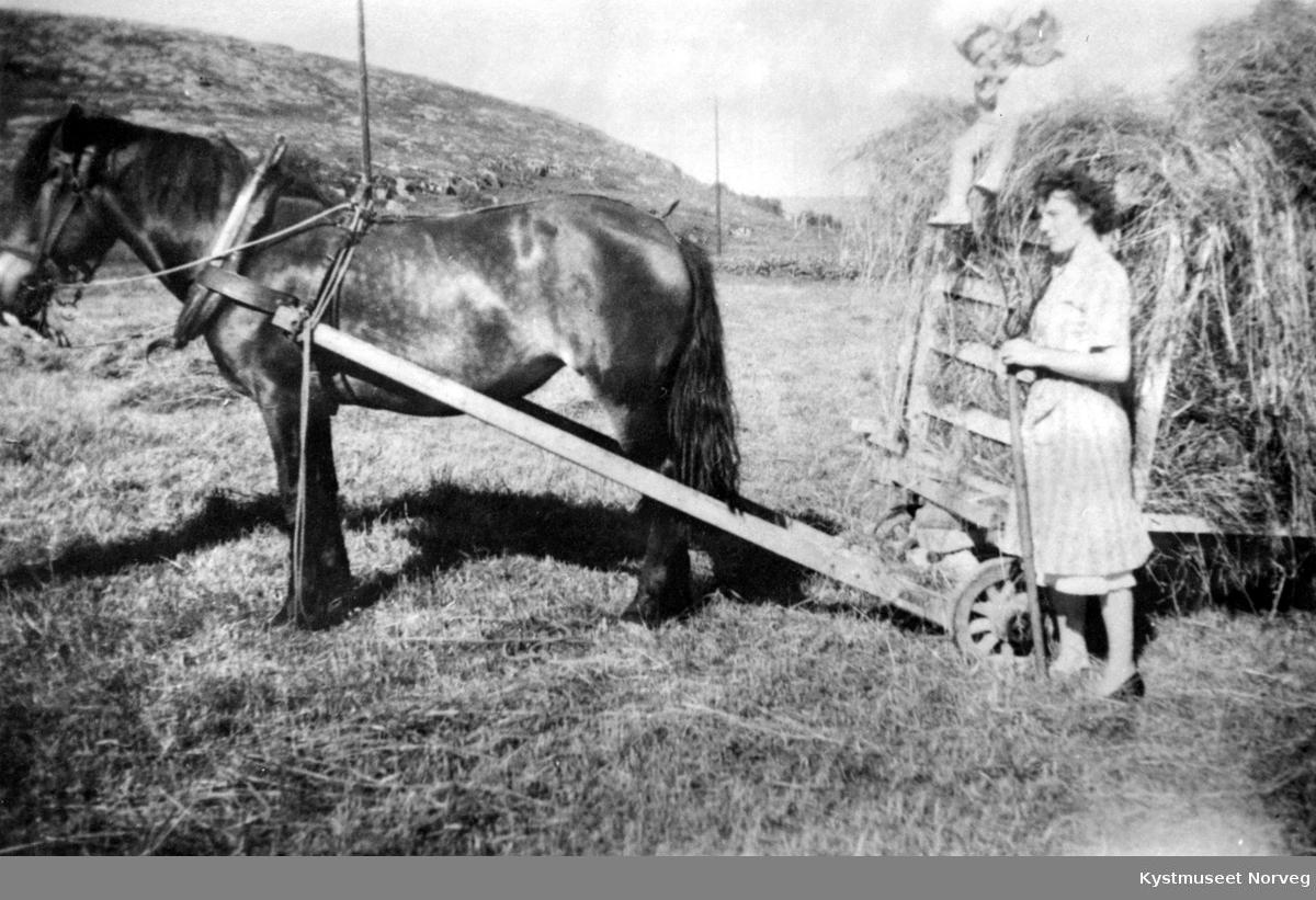 """Randi Johansen Williksen, Torbjørg Johnsen Laugen og Elisabeth Fasting sammen med hesten """"Vanda"""""""