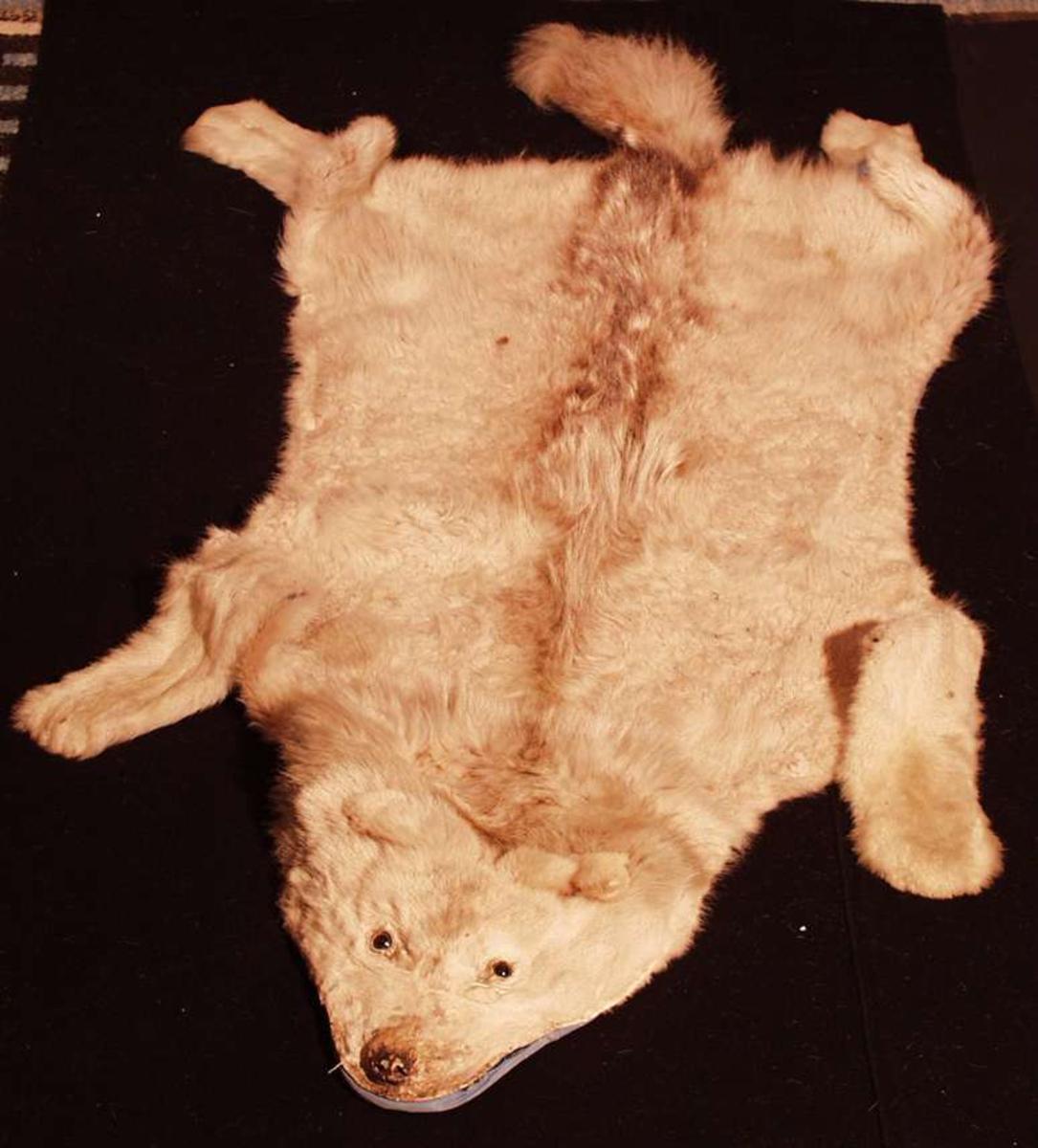 Polarulvskinn foret med lyseblått to-skafts bomullstøy. Utbrettet fell med hode, hale, ben, mer langhåret i nakke, langs rygg mot hale enn ellers. Isatt glassøyne. Fargen er noe mer brunlig over nakke og rygg mot hale, såkalt ål.