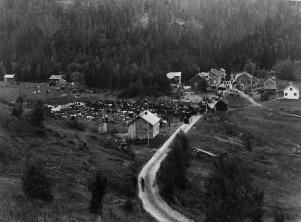 Et av de første dyrskua i Gjerstad