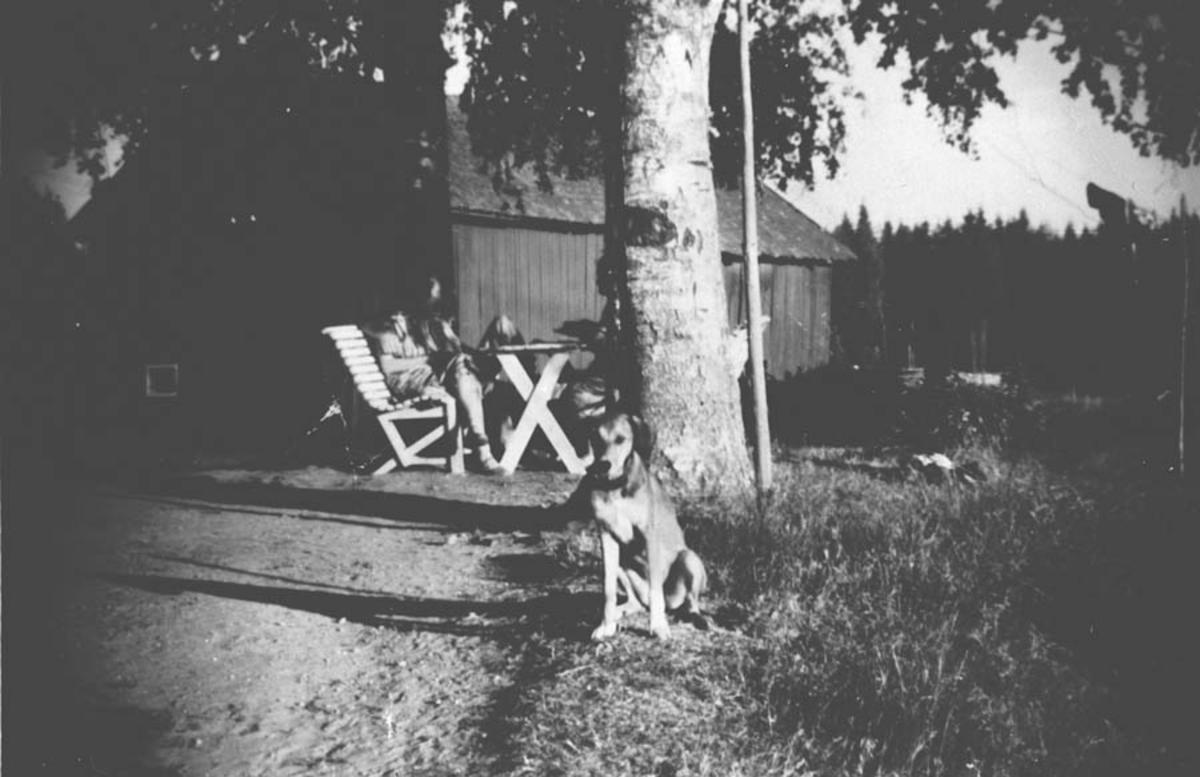 Småbruk, låve. Personer sitter ved hagebordet under et tre.