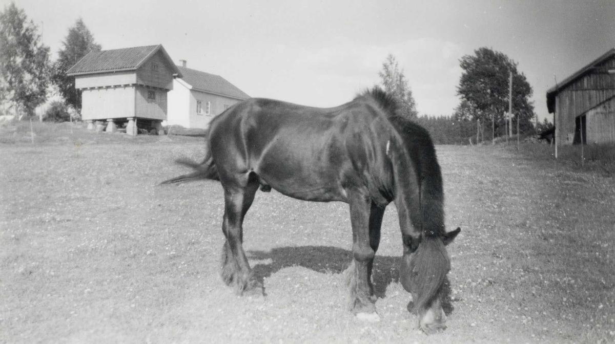 Gård og hest, Daltorp 1953