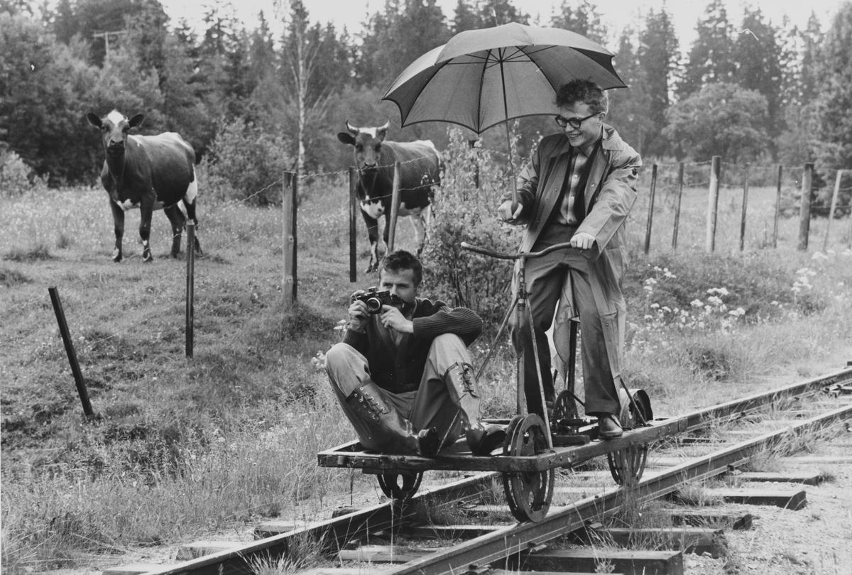 Tertittens nedlagte spor er tatt i bruk til dressinsykling, her under reportasjereise for ukebladet Aktuell.