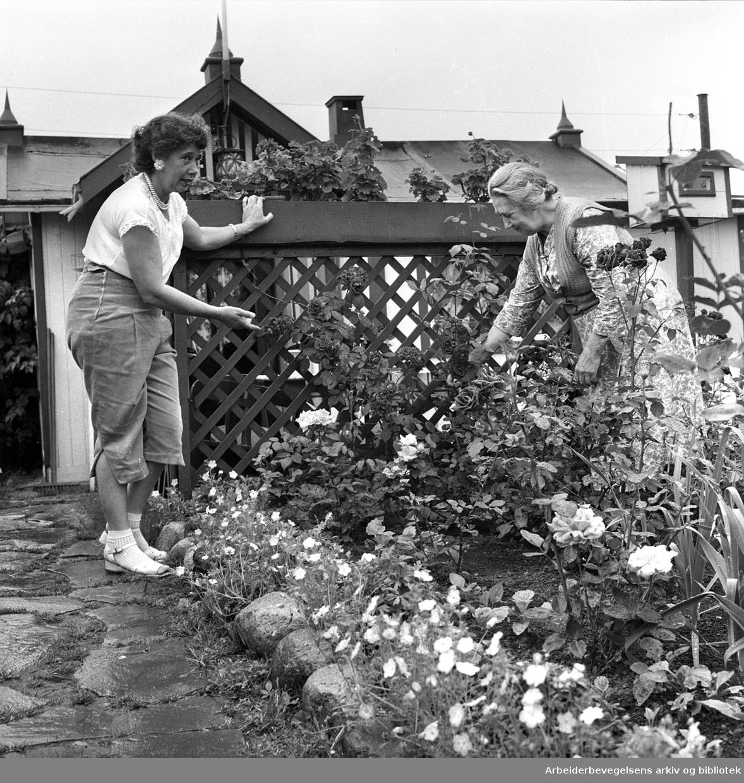 Rodeløkka kolonihage, .juli 1957