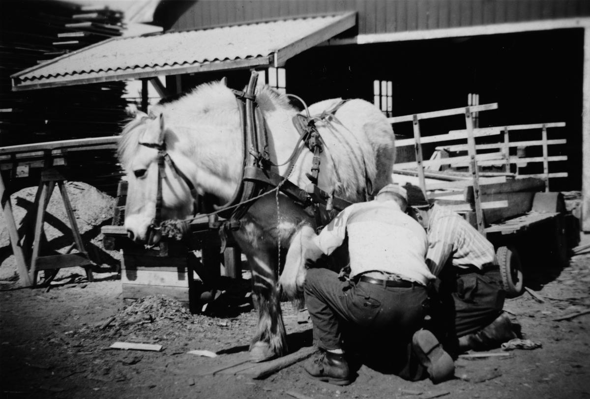 Haagenrud sag, hest med vogn, hestekjøretøy. To ukjente.
