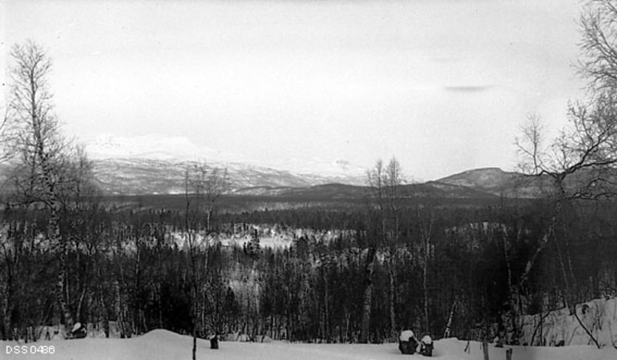 skogsomåde, landskap, vinter