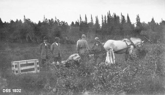 Utsetting av bever i Åmottjern på Songli jaktkubbs eiendom.  Bildet viser en fjording som øyensynlig har trukket et slep inn i utmarka.  Ei rektangulær trekasse, som antakelig rommer bever, står ved siden av slepet.  Fire menn og ei kvinne står mellom hesten og kassa.  I forgrunnen en del bjørkeris, bakenfor ei myr som er omgitt av granskog.