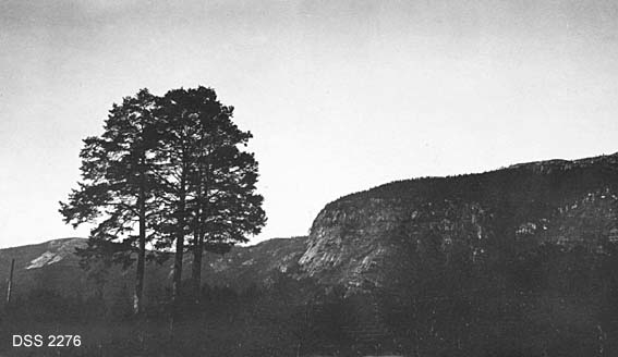 """""""Kong Hanes grav"""" i Bygland i Setesdal.  Forhøyning i terrenget med 3-4 digre furuer i forgrunnen, muligens gravhaug.  I bakgrunnen steile fjellsider med skogkledd platå på toppen."""