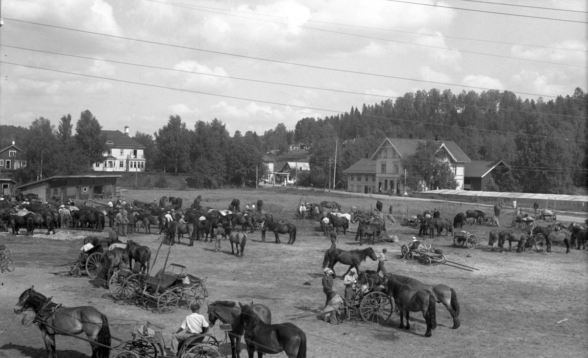 Hester, kjøretøy