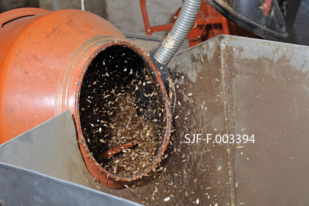 Våtavvinging i betongblander ved Skogfrøverket på Hamar våren 2011.  Fotografiet viser åpningen til beholderen på en oransjemalt, roterende betongblander som er fylt med fuktet frøhams.  Kombinasjonen av fuktighet og den elteprosessen rotasjonen skaper får frøvingene – som det ikke er hensiktsmessig å ha med når frøet skal brukes i skogplanteskoler – til å falle av.  Dette fotografiet ble tatt da prosessen var kommet så langt at det ble tilført luft for å tørke den fuktete og eltete frøhamsen.  Lufta, som kommer fra et par støvsugerliknende innretninger på en hjell over de tre betongblanderne som ble brukt, føres gjennom en slange mot beholderen på betongblanderen.  Etter hvert som innholdet tørker, får rotasjonen og luftstrømmen de lette frøvingene til å løftes opp og flagre ut av betongblanderne.  De samles opp i digre blikkbeholdere foran betongblanderne.    Da dette fotografiet ble tatt hadde Skogfrøverket også fått en spesialmaskin for frøavvinging.  Ved denne anledningen var den imidlertid full av furukongler, og frøverksmedarbeideren som hadde hovedansvar for den praktiske frøproduksjonen fant det like greit å bruke betongblanderne.